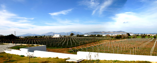 The Wine-yard in the spring time.